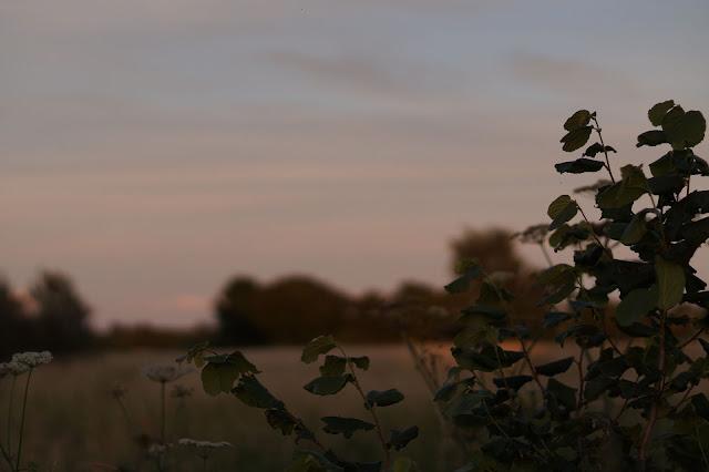Norfolk countryside summer blogger