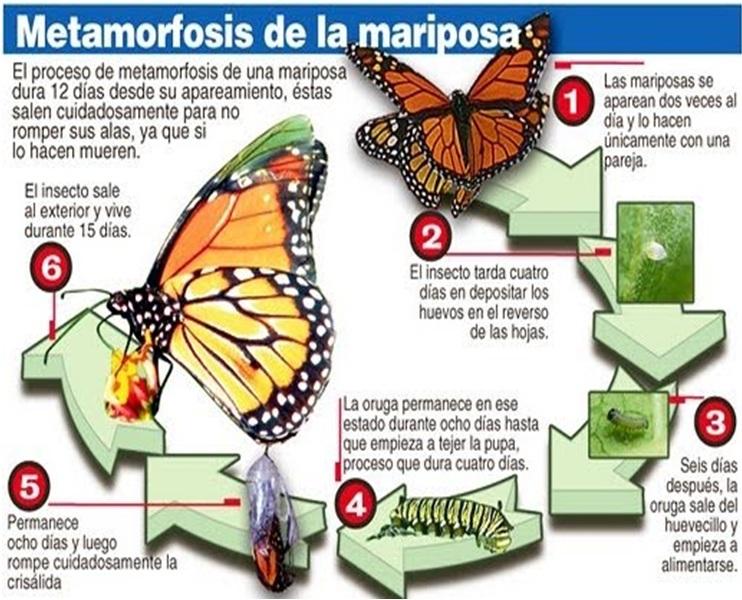 Falcón-voy: Pasión, muerte y resurrección de la mariposa