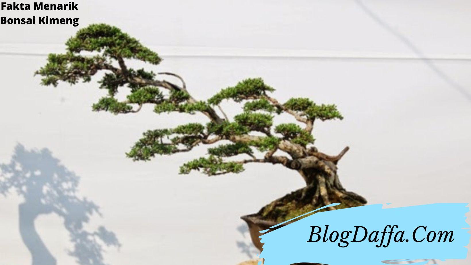 Fakta bonsai kimeng yang perlu kamu ketahui