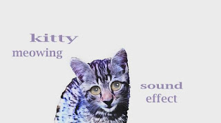 how kitten sounds