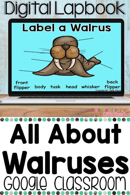 Google Classroom Walrus Digital Lapbook for Kindergarten or 1st grade students to use independently or in small groups with a January science lessons. Includes facts, labeling, videos, life cycle, vocabulary, and more.
