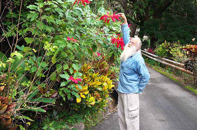 Ryukyu Mike dwarfed by a poinsettia
