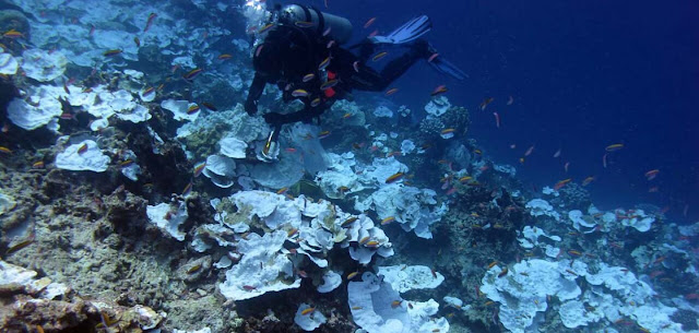 Coral reefs facing a hot time and increased bleaching, especially along US coasts