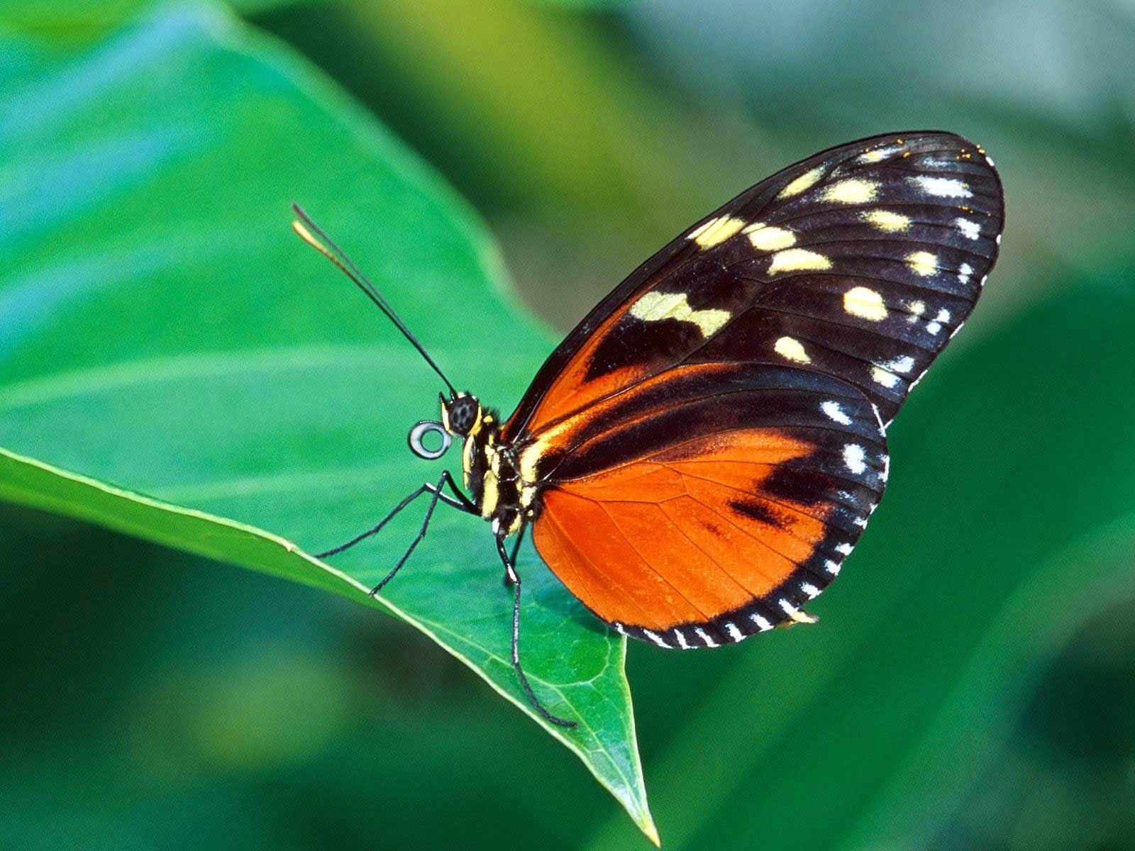3d butterfly wallpapers desktop ~ Snipping World!