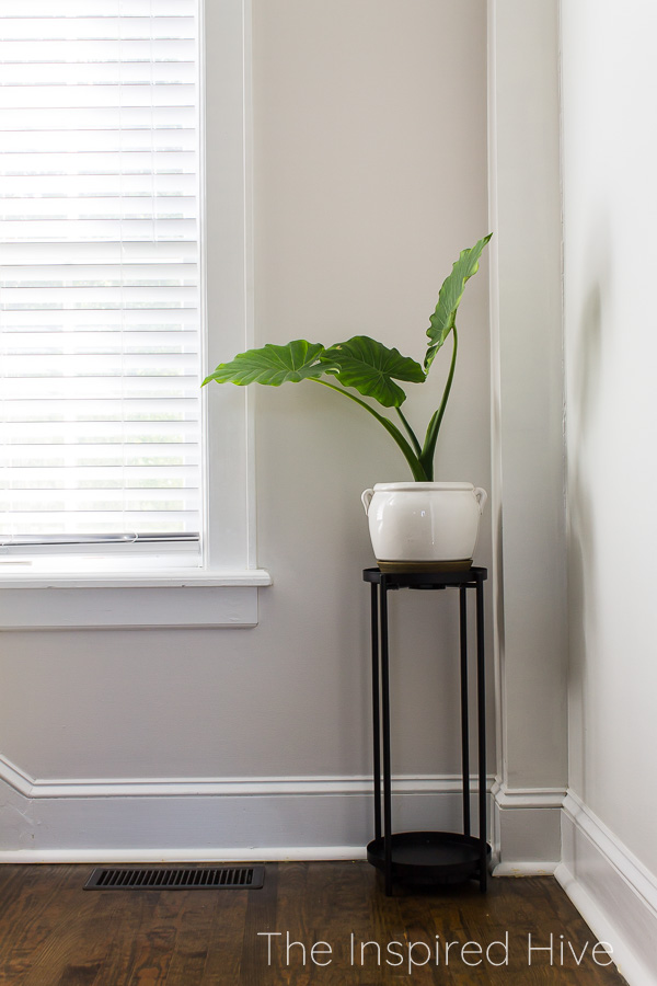 Plant stand with elephant ear