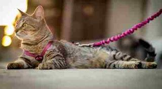 Pisica legată de pat: Poveste cu tâlc