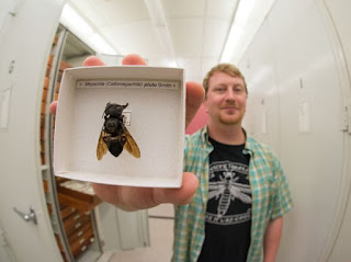 Penemuan,Lebah,Terbesar Didunia, Berlokasi, Di Indonesia, lebah raksasa, informasi lebah, lebah madu, pakar lebah, penelitian lebah, penelitian, lebah indonesia, lebah raksasa, lebah aneh, news, berita, serangga, dilindungi 2