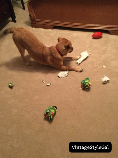 pup making a mess tearing up paper