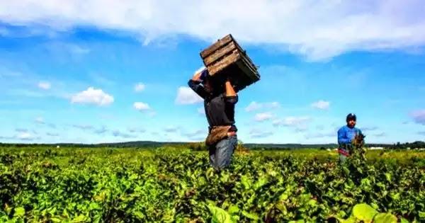Έρχεται «ΟΑΕΔ για μετανάστες» για να αναλάβουν τις αγροτικές εργασίες και να μείνουν στα χωριά σε όλη την Ελλάδα