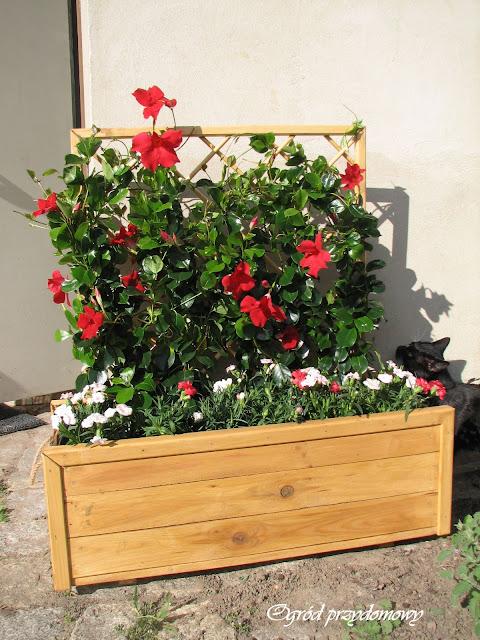 dekoracje ogrodowe, drewniana donica, drewniana pergola, drewniana ławka, ogród przydomowy