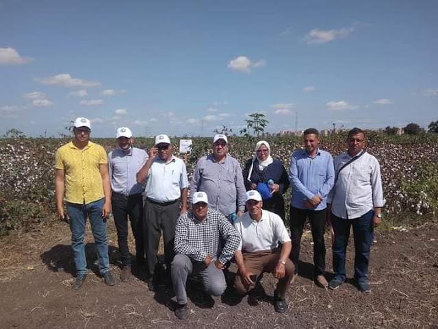 الزراعة: تنظيم يوم حقل للقطن بمحطة بحوث سخا في محافظة كفر الشيخ