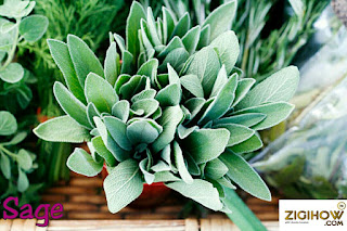 THESE HEALTHY HERBS ARE A MUST HAVE AT HOME 24