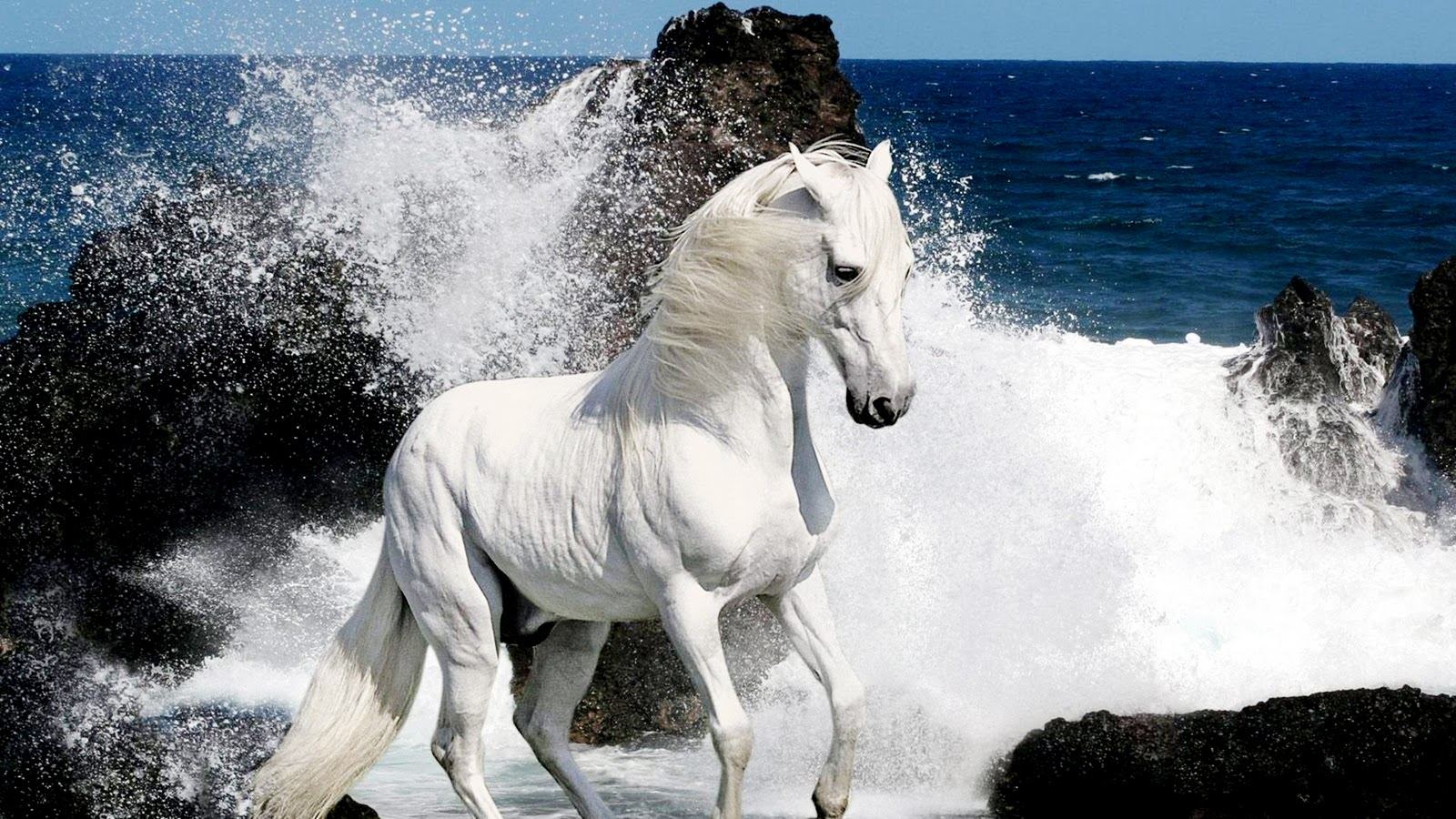 Simple   Wallpaper Horse Ultra Hd - 0614964adff44879ea7059b1c224c9a0  Image_628821.jpg