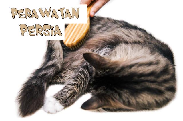 Menyisir bulu Kucing Persia