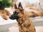 Sniffer Dogs Investigation
