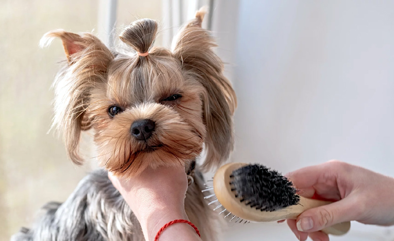 How to Brush a Dog Who Hates Being Brushed, According to the Groomer