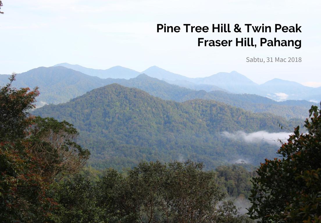Mendaki Pine Hill & Twin Peak Di Fraser Hill, Pahang