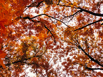 autumn leaves against the sky in new mexico