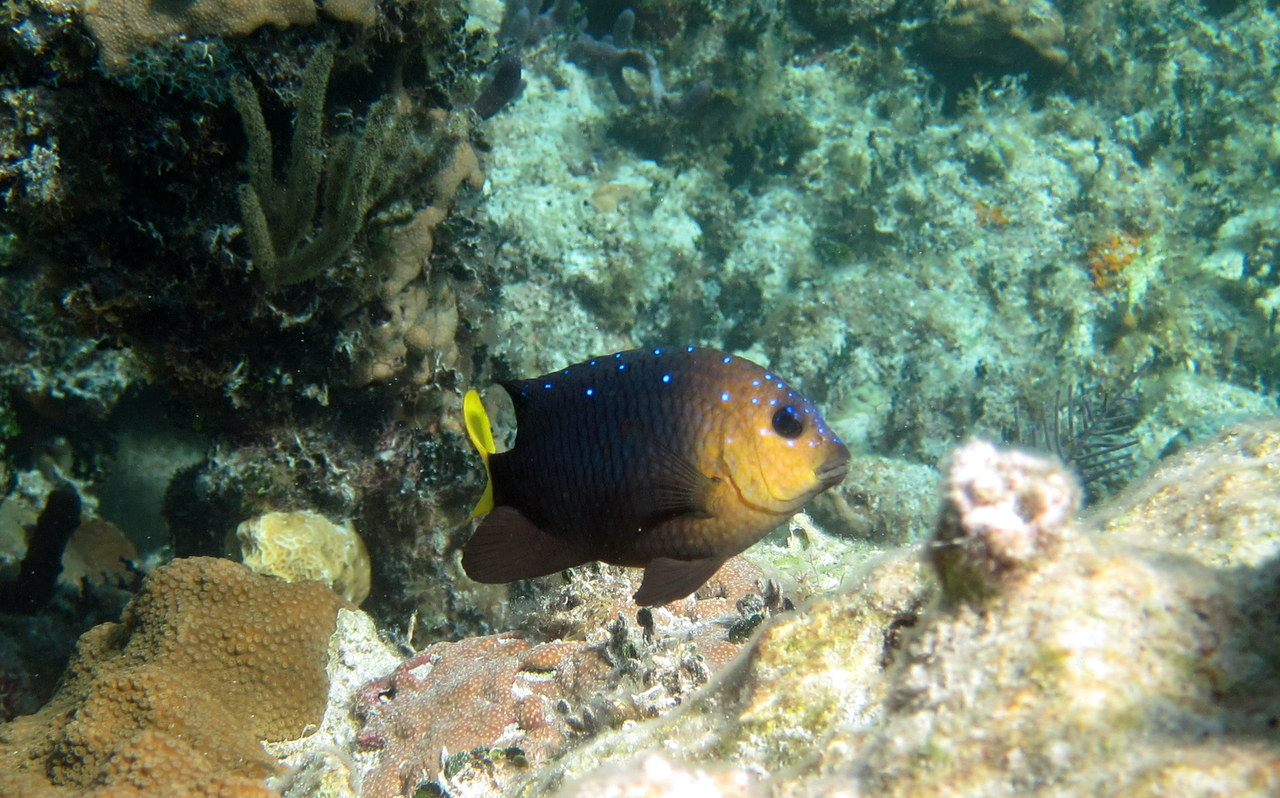Adventures of BruteForce: Bahamas - Diving and Snorkeling