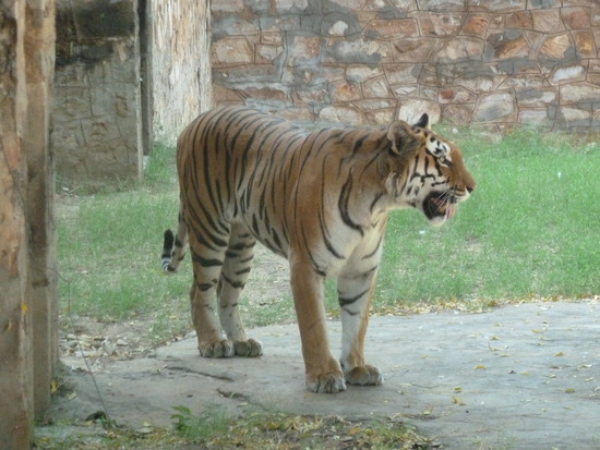 The Jaipur Zoo...