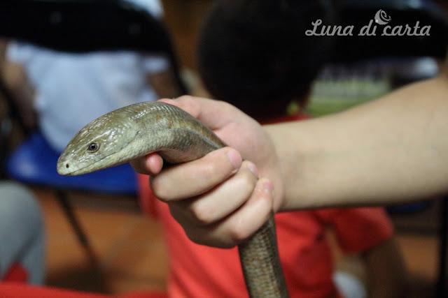 bambini e serpenti