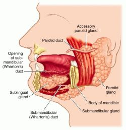 under chin muscle diagram sphincter muscle diagram anatomy and physiology of submandibular gland