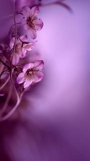 Wallpaper tema bunga keren