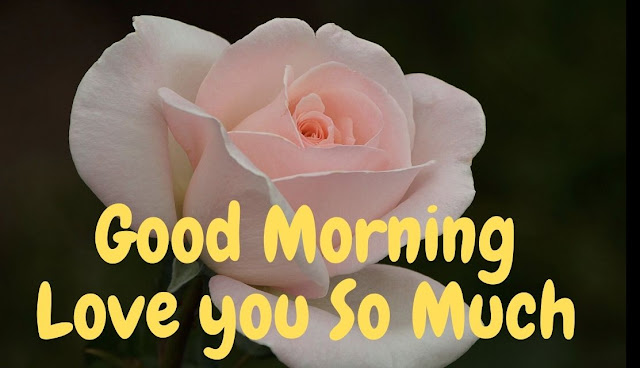 Good Morning Love you So Much white rose Image