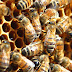 FDA Finds Monsanto's Weed Killer In U.S. Honey