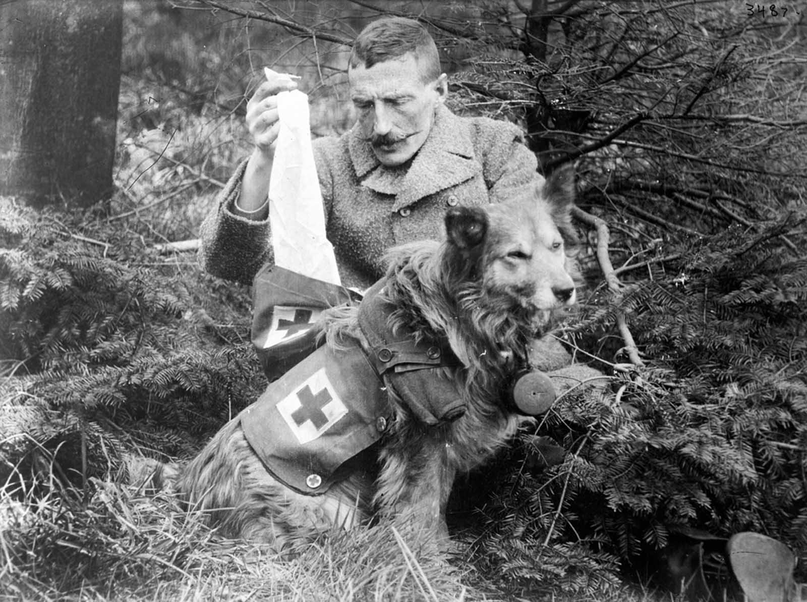 Bandages retrieved from the kit of a British Dog, ca. 1915.