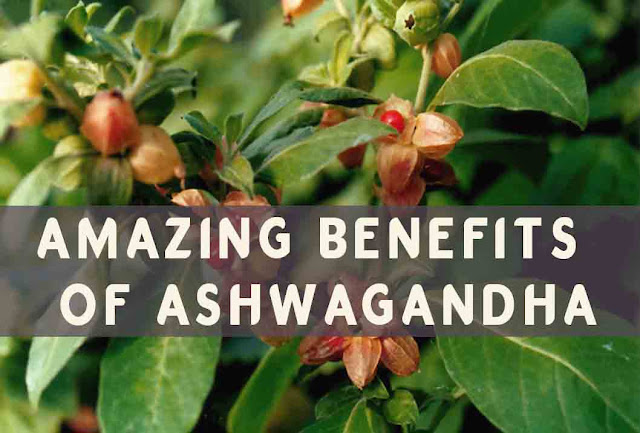 Ashwagandha its benefits and side effects