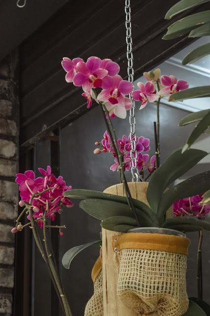 orquidea de supermercado deixada em um bom local