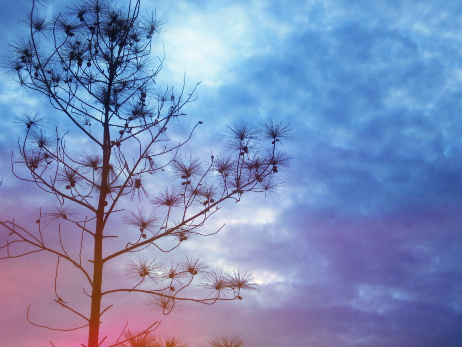 Lavender Dome Januari 2012