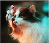 9 Foto Kucing Berpenampilan Menawan