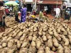 OMG; Man Arrested For Stealing Yam In Imo  State