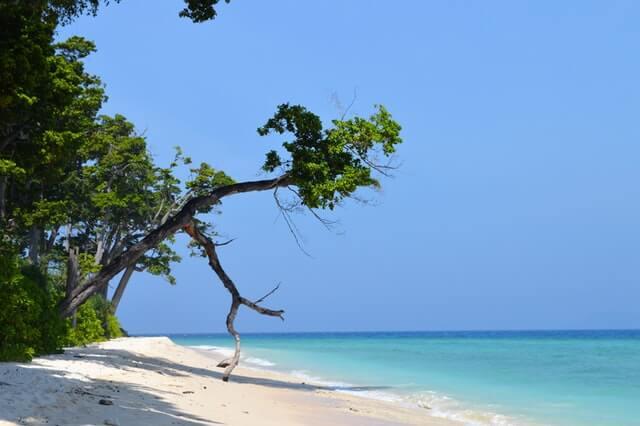 Ilha indigena