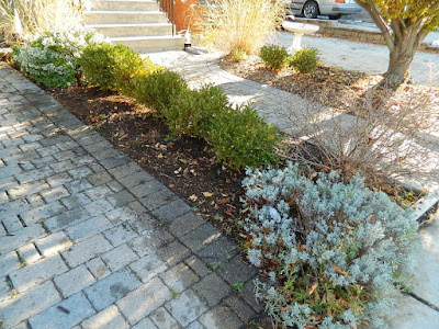 St. Clair West Village Toronto Front Yard Fall Cleanup After by Paul Jung Gardening Services--a Toronto Gardening Services Company