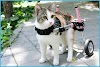 Disabled cats: what solutions to accompany them?