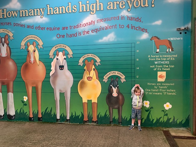 Little boy standing next to a chart of horses