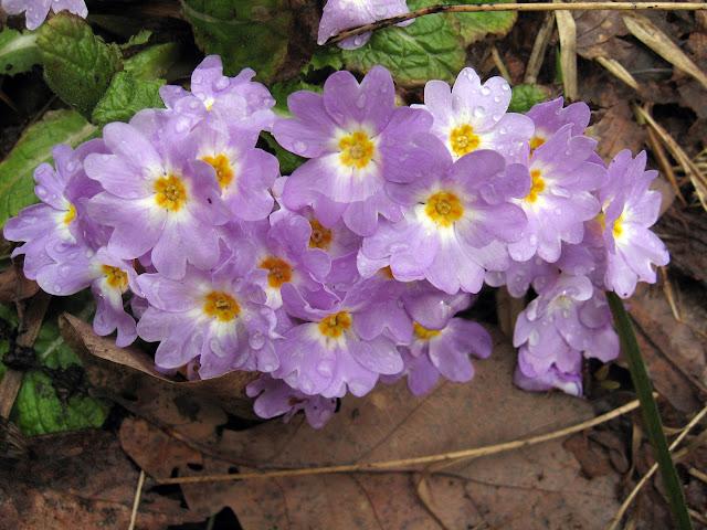 Весна. Жизнь возрождается.