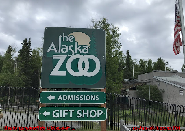 Anchorage The Alaska Zoo