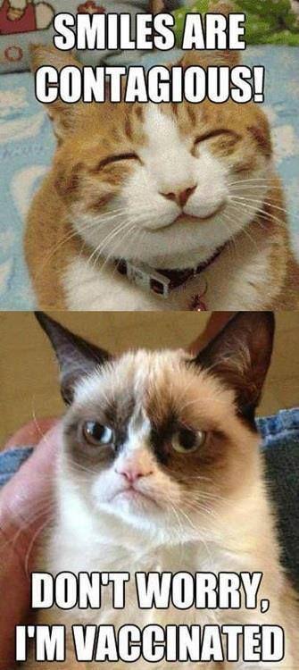 Best Cat Memes 1