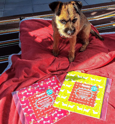 terrier looking at dog safe wrapping paper