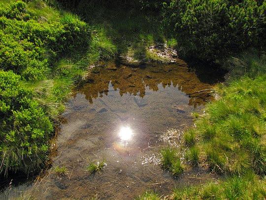 Słońce przegląda się w lustrze wody.