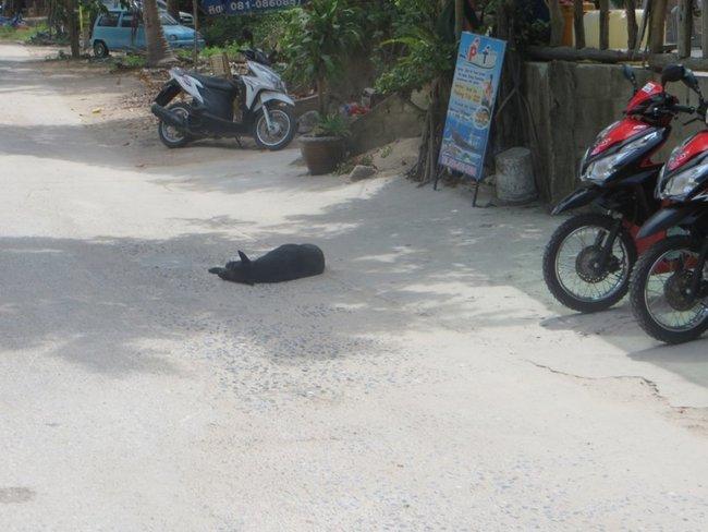 Собака спит на дороге