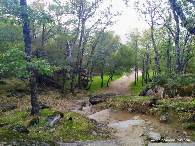 bosque de la Herrería en Otoño, Madrid