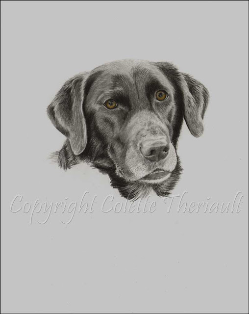 commissioned dog portrait work in progress
