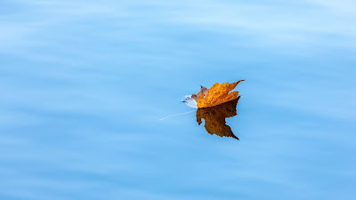 Wallpaper Lake, Autumn, Maple, Leaf