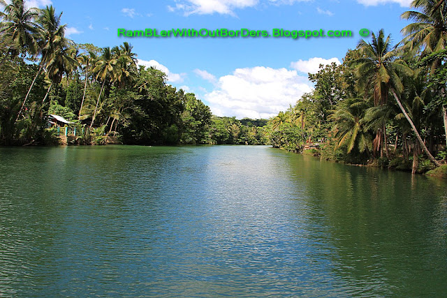 Palm trees, Loboc River, Bohol, Philippines