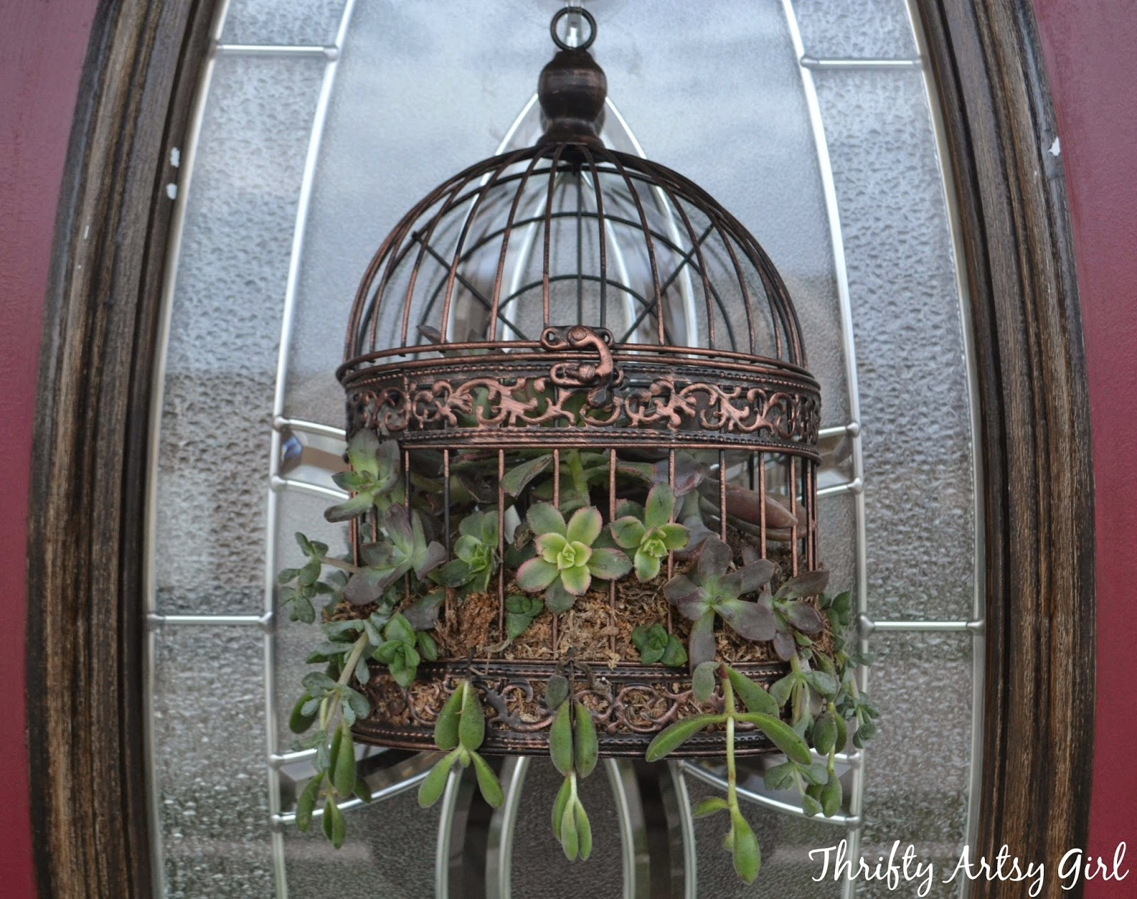 thrifty artsy girl how to make a succulent birdcage wreath. Black Bedroom Furniture Sets. Home Design Ideas